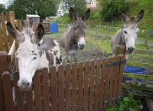 Sanquhar-three-donkeys